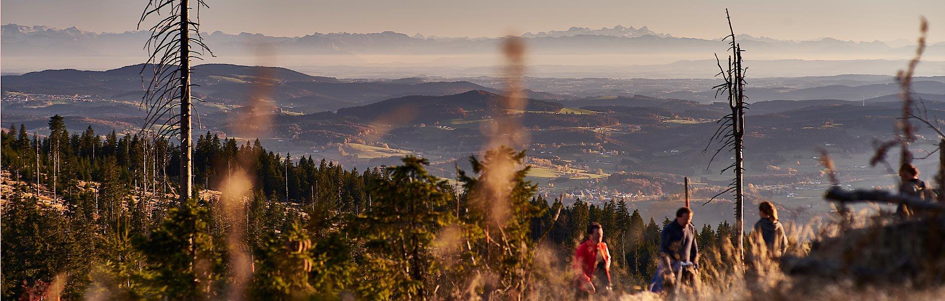Wandern im Bayerischen Wald - Wanderpensionen in Bayern.